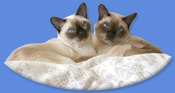 Matrix and Coconut.  All Natural Tonkinese